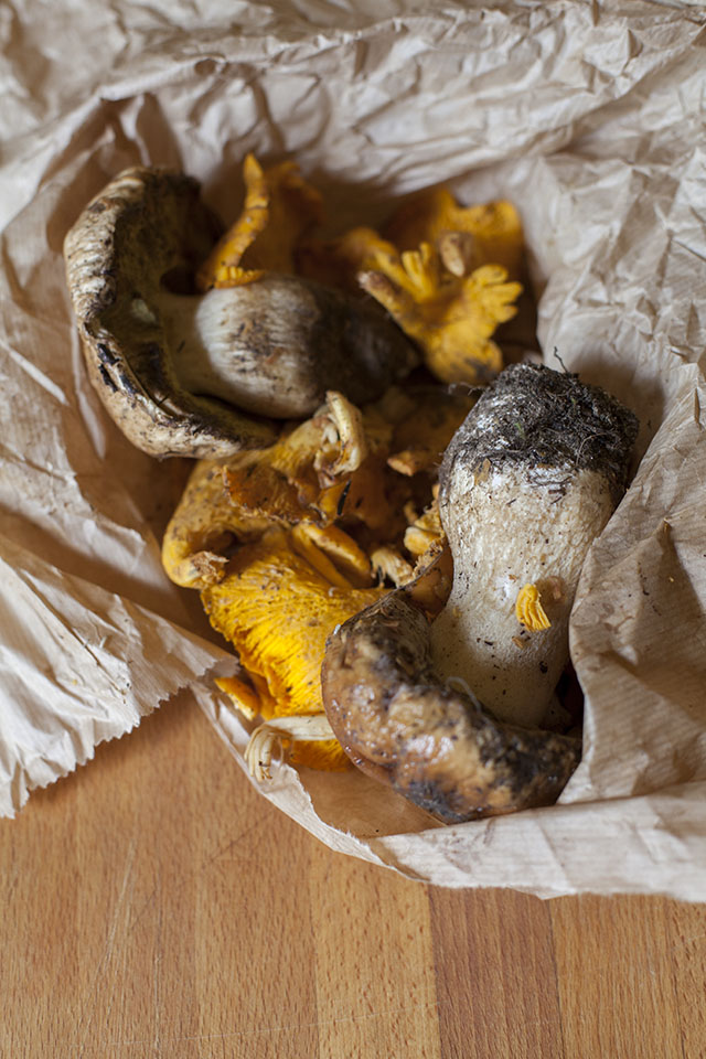 porcini and chantarelle mushrooms