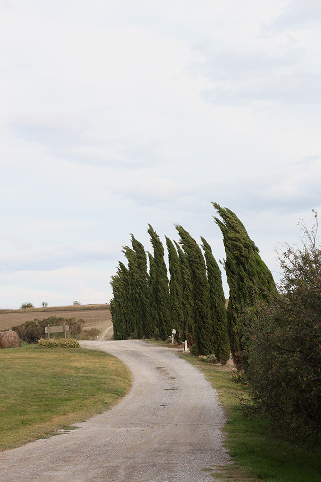 Agriturismo Il Rigo cypress lined driveway