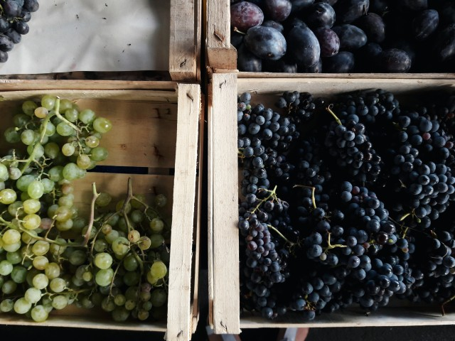 Grapes for schiacciata