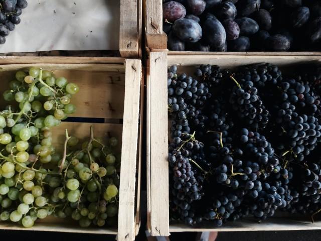 Grapes for schiacciata
