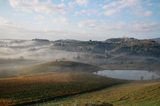 autumn at Fattoria Poggio Alloro, San Gimignano
