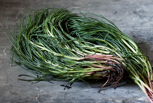 agretti monks beard