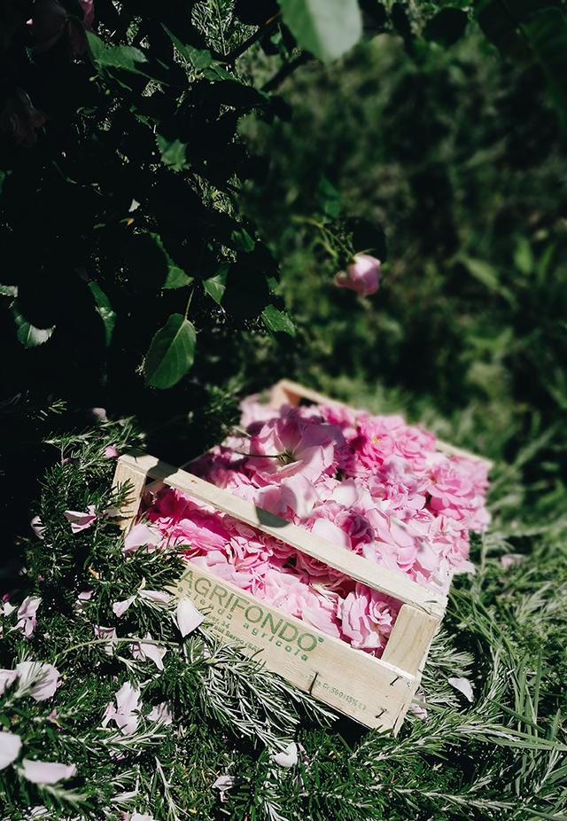 canto-del-maggio-roses-2