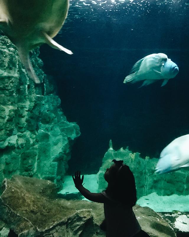 Livorno-aquarium
