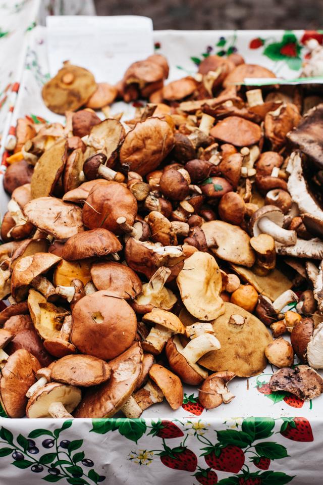 Trento mushrooms