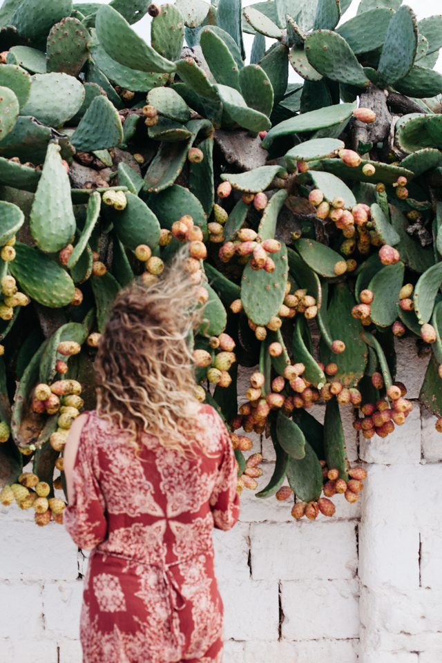 Masseria Potenti picking prickly pears