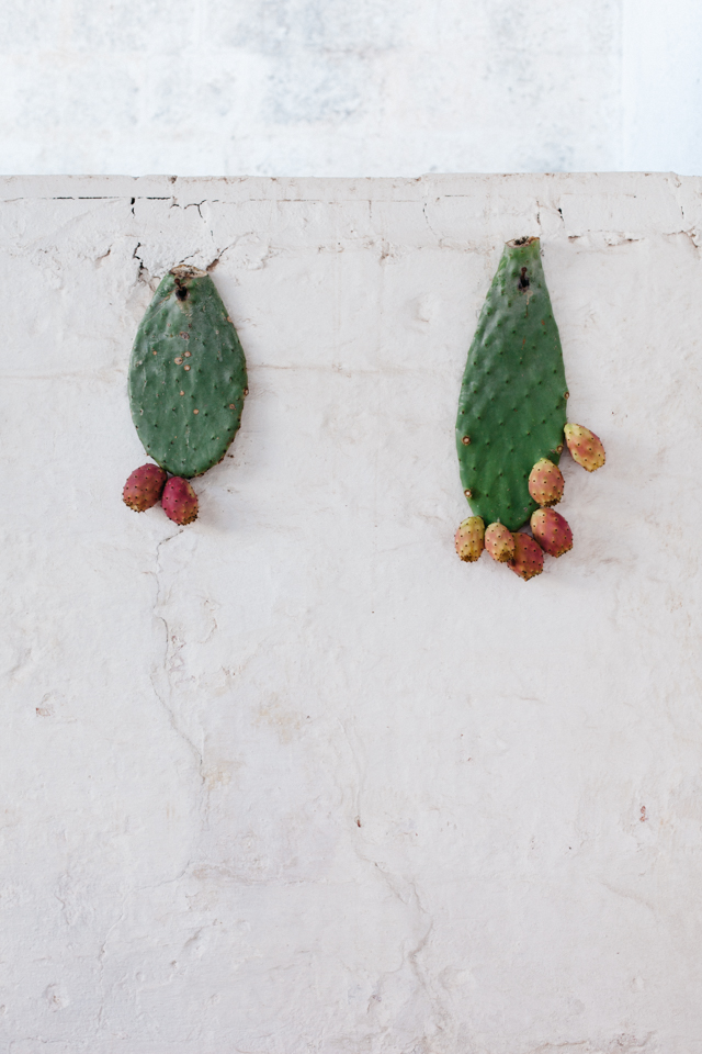 Masseria Potenti hanging prickly pears