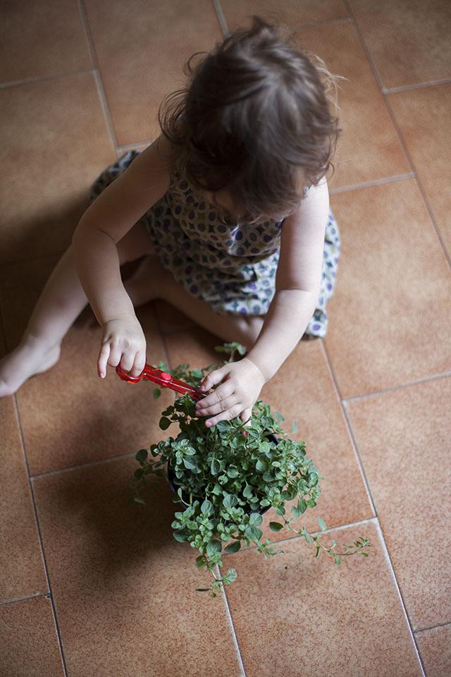 fresh herbs for mushroom pappardelle