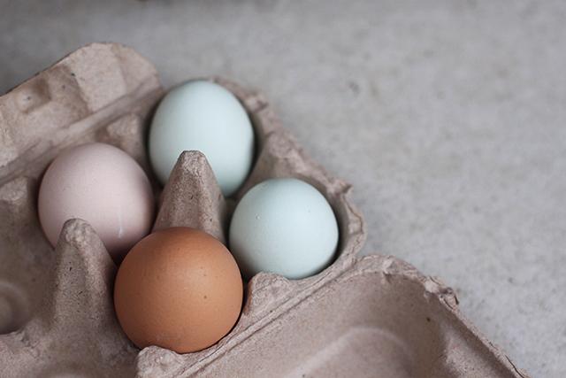 eggs copy blog