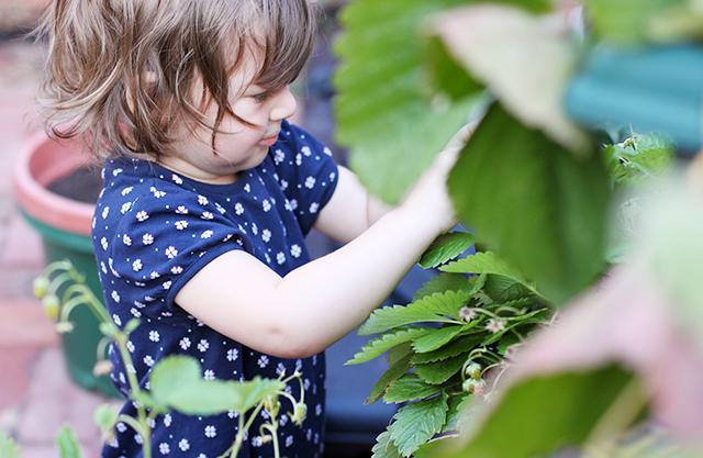picking wild strawberries blog IMG_5927
