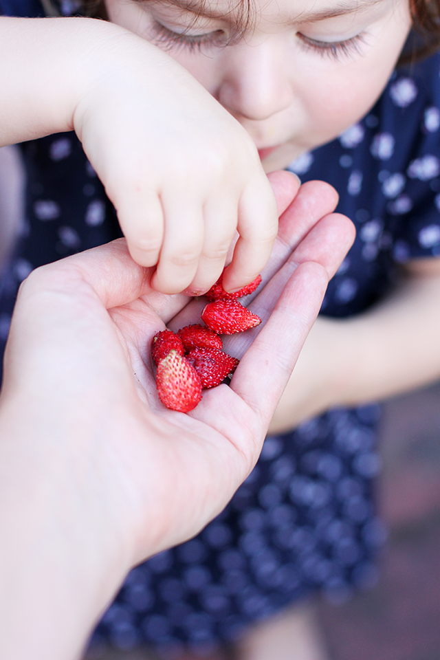 food memories - wild strawberries