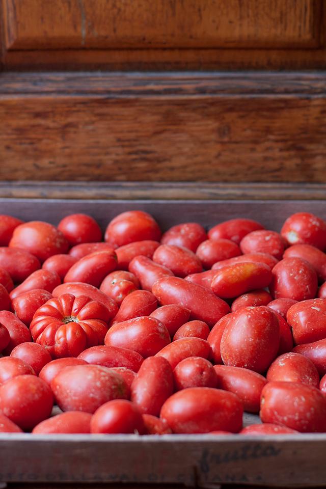 tomatoes for pomarola