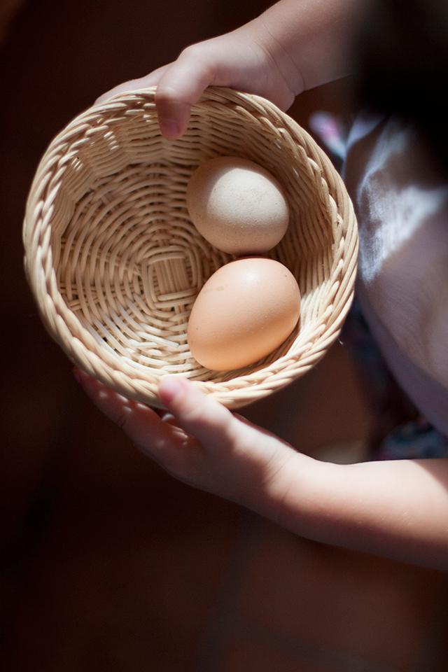 collecting eggs poggio alloro