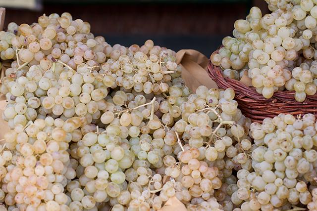 grapes at la parrina