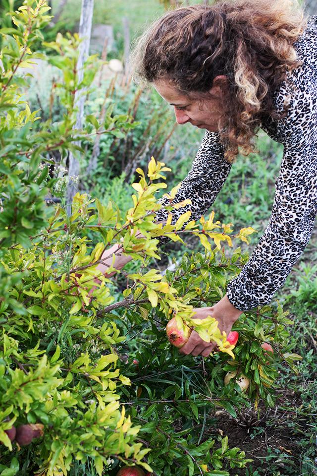 puscina pomegranate