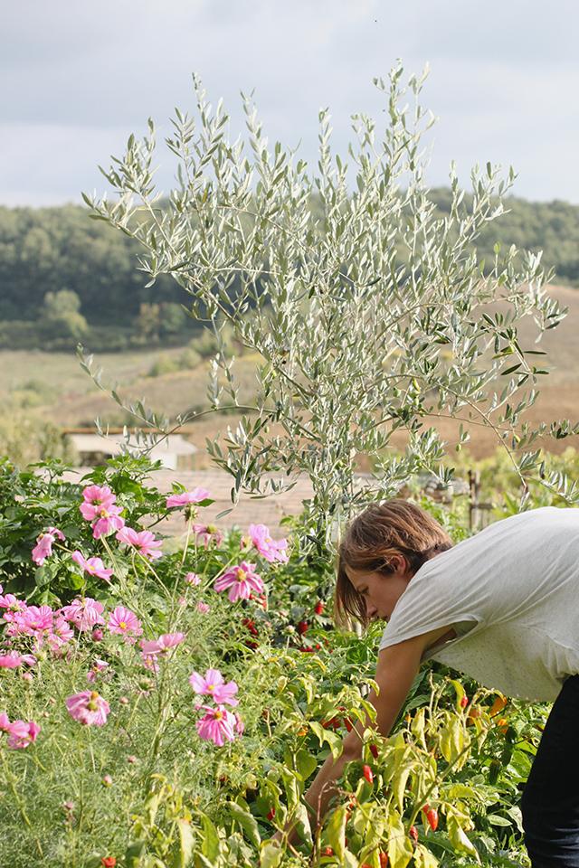 Puscina wildflowers