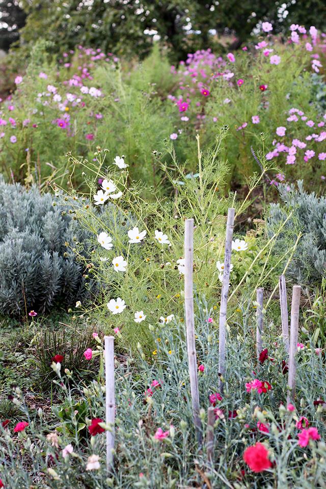 puscina flower farm, Tuscany
