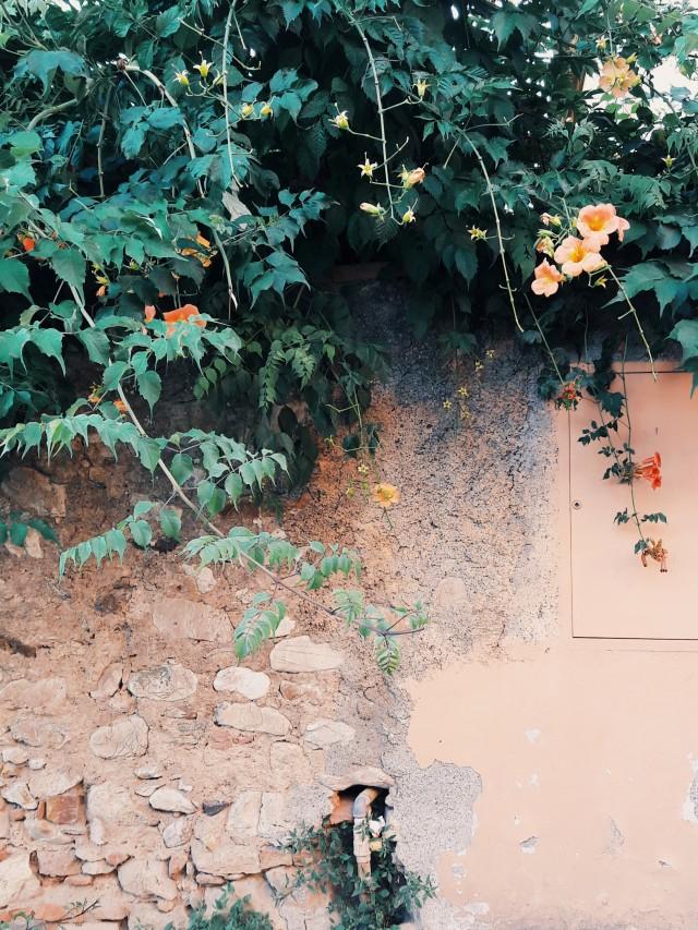 Peach walls in Bolgheri
