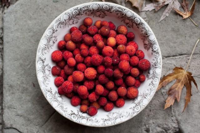corbezzolo Irish strawberry tree fruit
