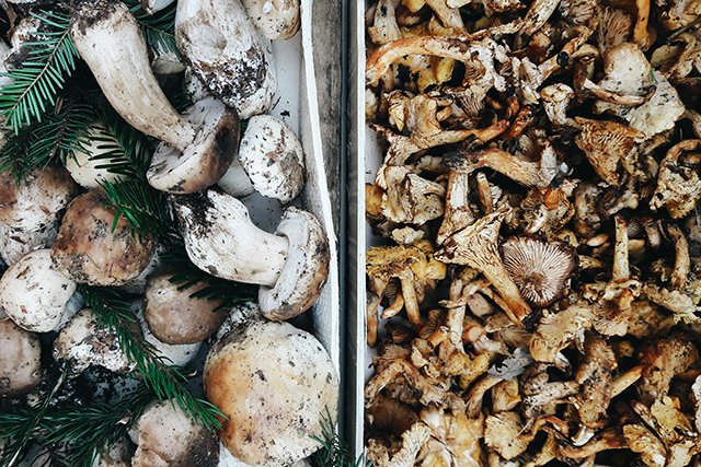 latteria-studio-funghi-mercato