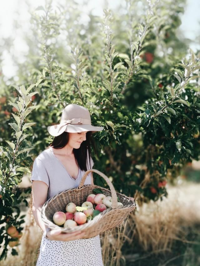 Picking apples Acquacotta workshop