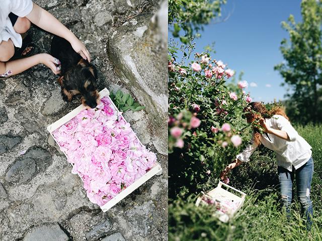 canto-del-maggio-roses-1