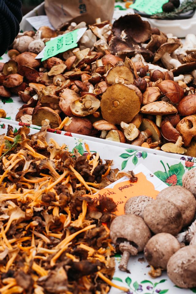 Trento wild mushrooms