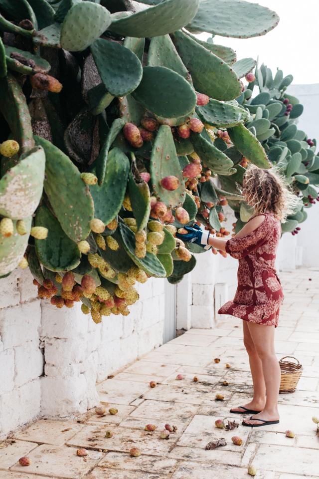 Masseria Potenti blog-28