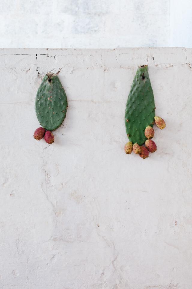 Masseria Potenti hanging prickly pears
